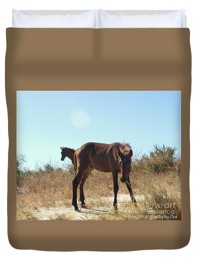 Wild Horses Desert Of Mexico Duvet Cover featuring the photograph Wild Horses Desert Of Mexico by Charlene Cox