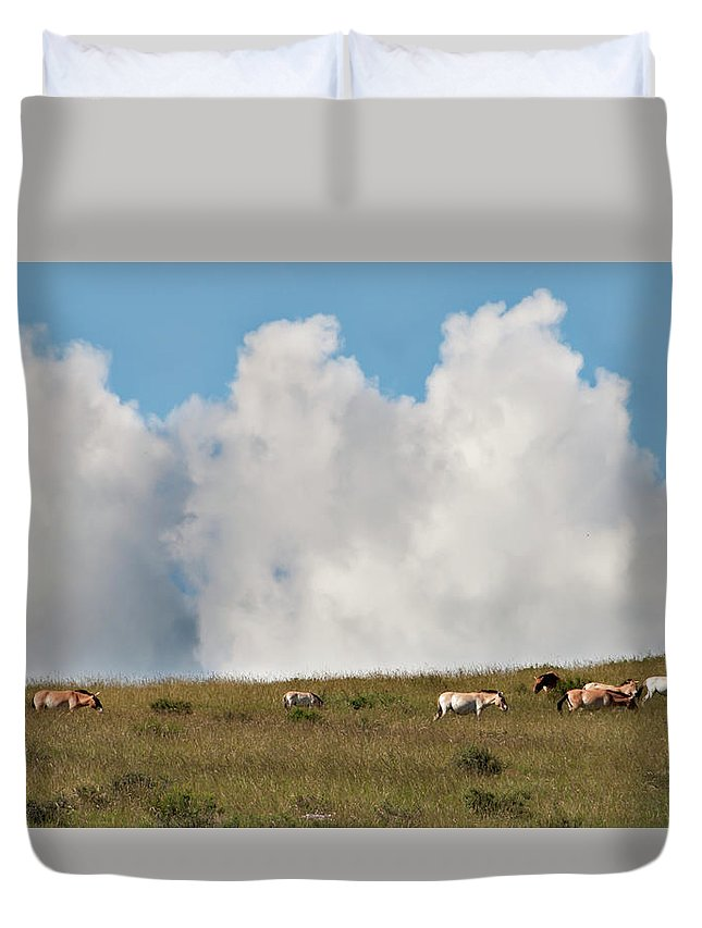 Asia Duvet Cover featuring the photograph Wild Mongolian Horses by Alan Toepfer