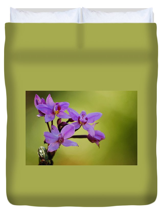 Wildflower Duvet Cover featuring the photograph Wild Orchids 2 by Michael Peychich