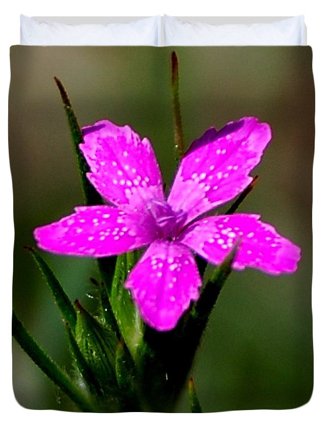 Digital Photo Duvet Cover featuring the photograph Wild Pink by David Lane
