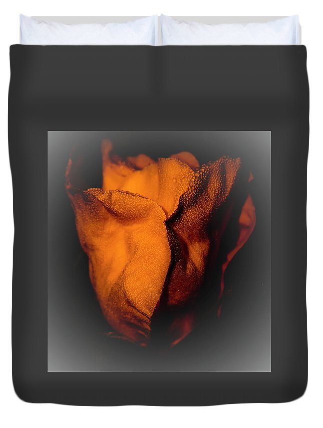 Rose Duvet Cover featuring the photograph Wild Rose by Steven Natanson
