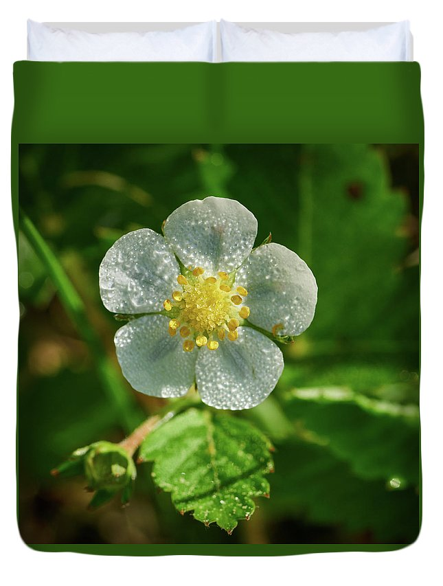 Finland Duvet Cover featuring the photograph Wild Strawberry Flower by Jouko Lehto