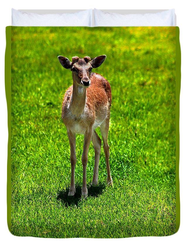 Ingridgloverart Duvet Cover featuring the photograph Wildlife 2 by Ingrid Glover