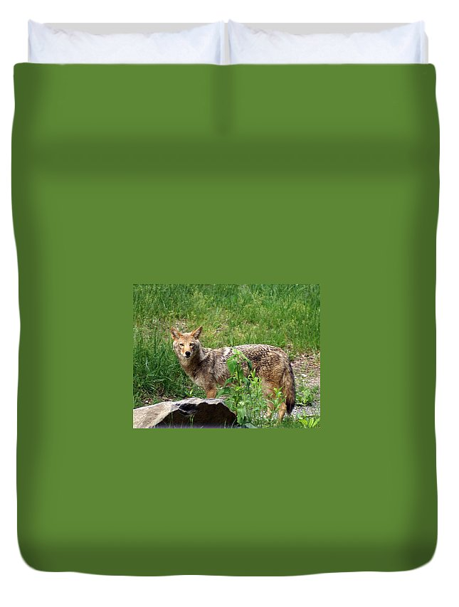 Cpyote Duvet Cover featuring the photograph Wiley Coyote by Marty Koch