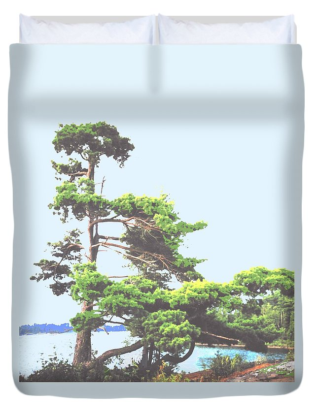 Pine Duvet Cover featuring the photograph Windswept by Ian MacDonald
