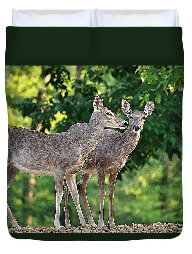 Deer Duvet Cover featuring the photograph Wink Wink by Bobbie Moller