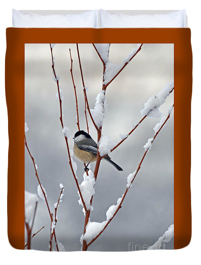 Berry Duvet Cover featuring the photograph Winter Chickadee by Diane E Berry