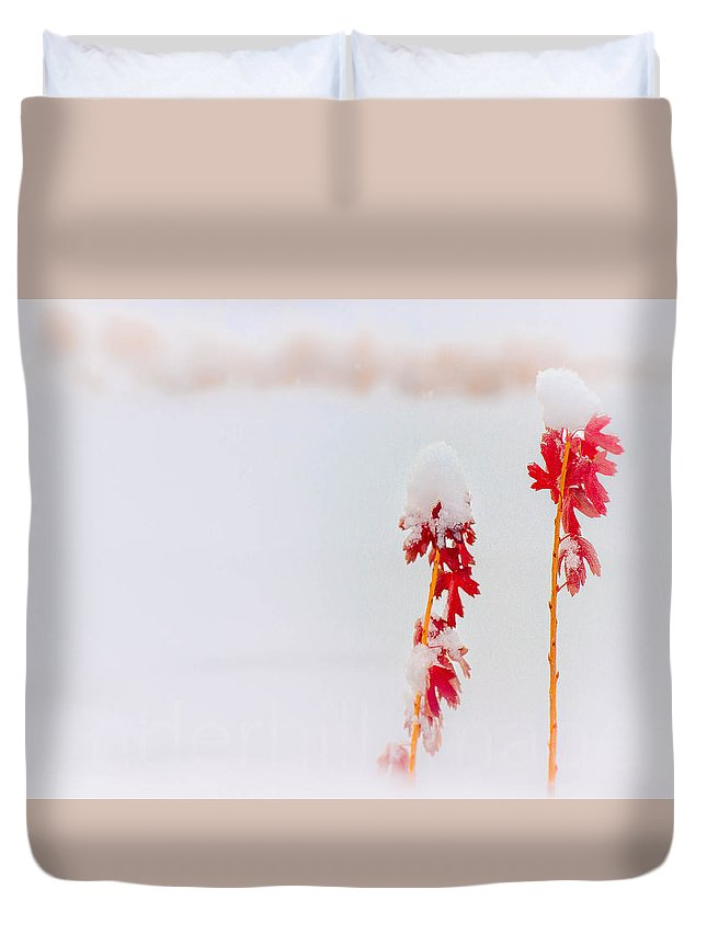 Winter Duvet Cover featuring the photograph Winter Color by Darin Wait