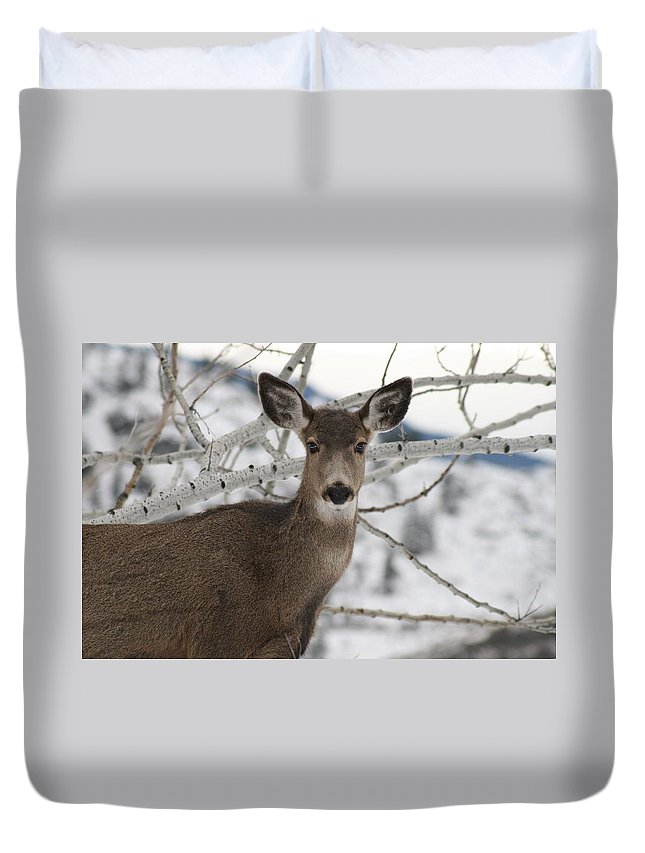 White Tail Deer Duvet Cover featuring the photograph Winter Doe Of The Okanagan by Tiffany Vest