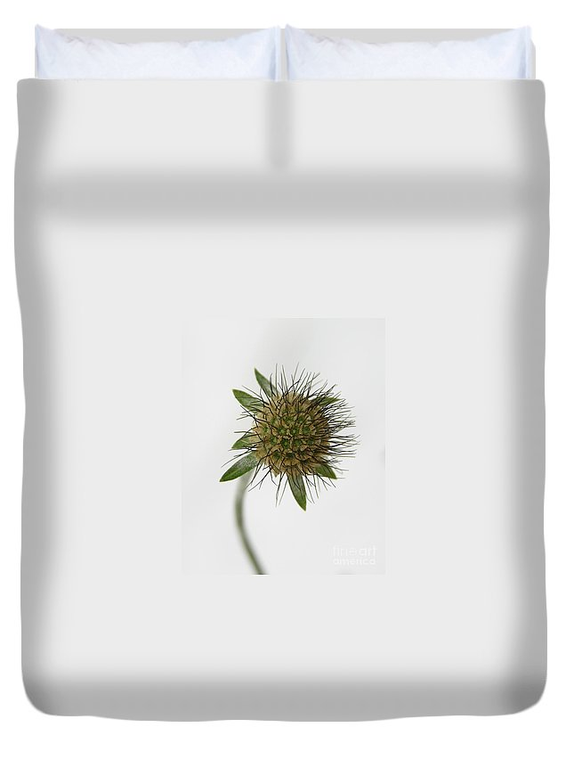 Nature Duvet Cover featuring the photograph Winter Pin Cushion Plant by Carol Groenen