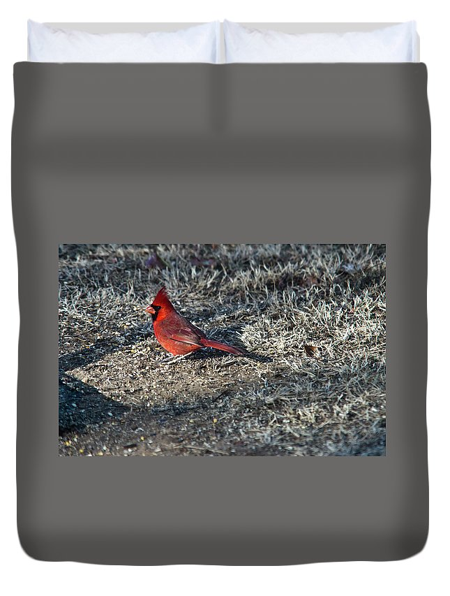 Arkansas Duvet Cover featuring the photograph Winter Redbird by Douglas Barnett