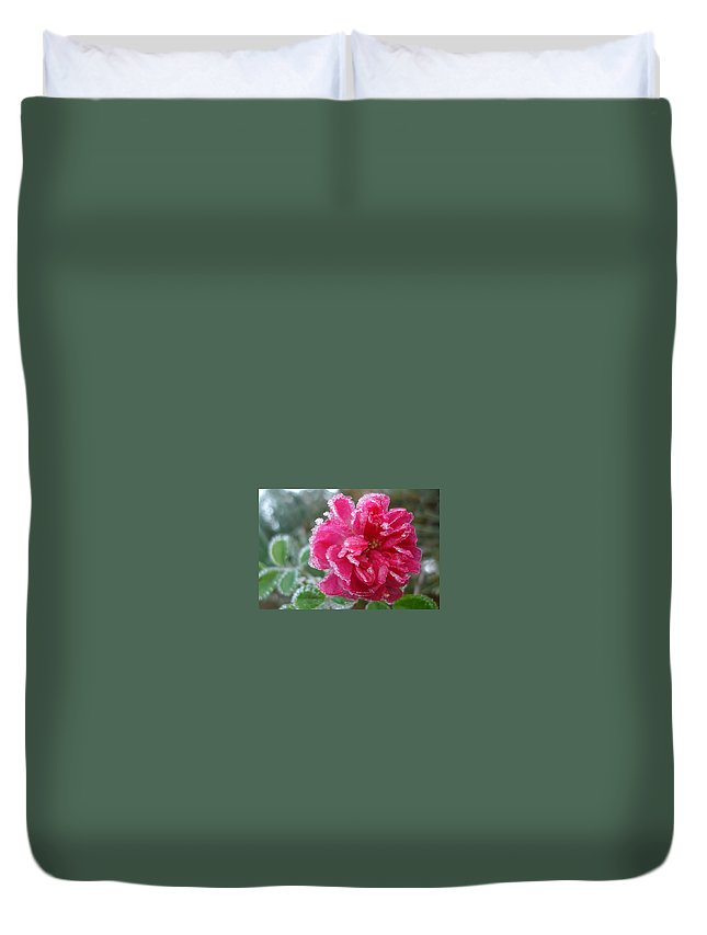 Rose Duvet Cover featuring the photograph Winter Rose by Susan Baker