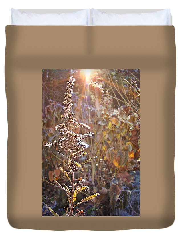Winter Duvet Cover featuring the photograph Winter Sun by JAMART Photography