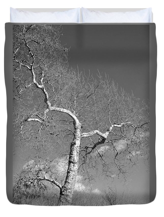 Tree Duvet Cover featuring the photograph Winter's Ghost by Parrish Todd