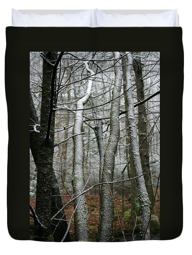 Tree Woods Forest Wood Snow White Green Winter Season Nature Cold Duvet Cover featuring the photograph Wintery Day by Andrei Shliakhau