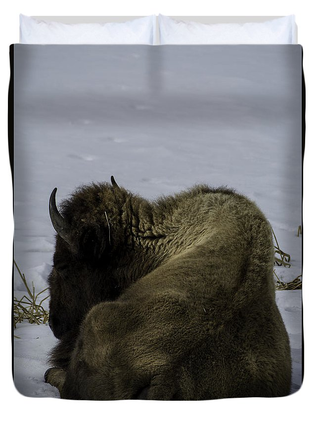 Bison Duvet Cover featuring the photograph Wintry Slumber by Tory Stephens