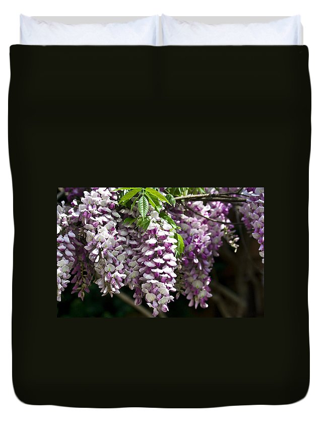 Wisteria Duvet Cover featuring the photograph Wisteria by Teresa Mucha