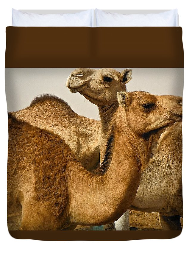 Camels Duvet Cover featuring the photograph Witch Way by Nicholas Mariano