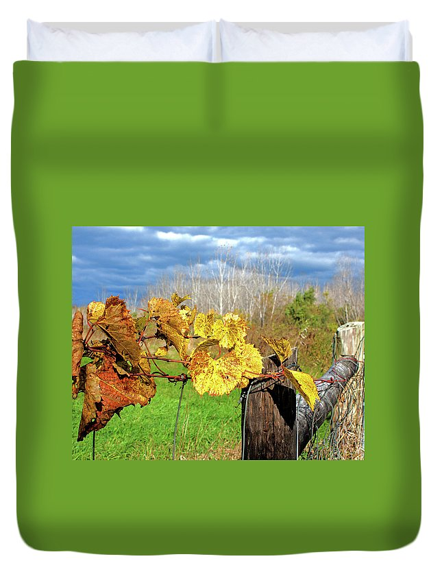 Grape Vine Duvet Cover featuring the photograph Withered Grape Vine by Ira Marcus