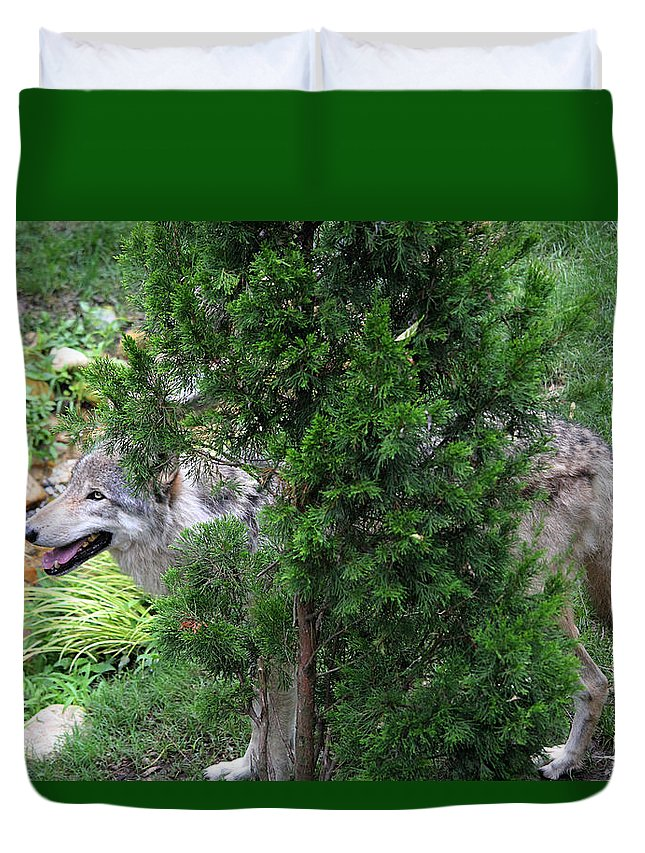 Wolf Duvet Cover featuring the photograph Wolf by E A