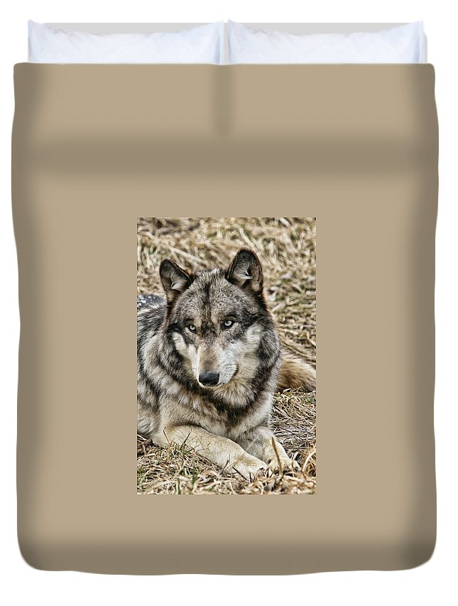 Wolf Wolves Gray Animal Wild Wildlife Canis Lupis Photograph Photography Digital Duvet Cover featuring the photograph Wolf Portrait by Shari Jardina