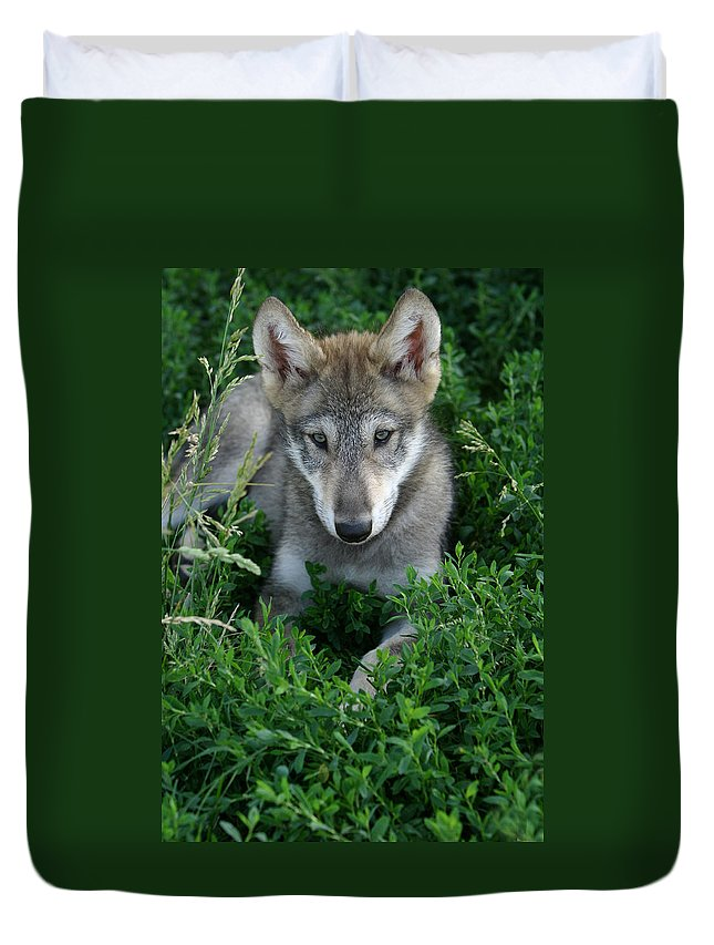 Wolf Wolves Pup Puppy Puppies Canis Lupis Wildlife Wild Animal Gray Timberwolf Photograph Photography Duvet Cover featuring the photograph Wolf Pup Portrait by Shari Jardina