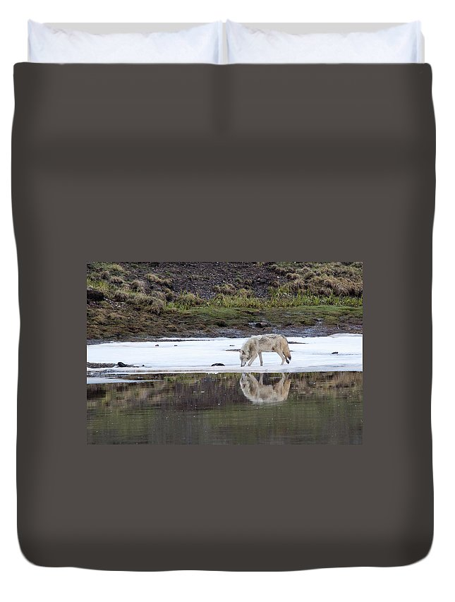 Yellowstone Duvet Cover featuring the photograph Wolflection by Steve Stuller