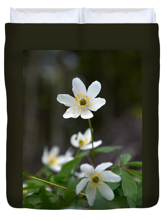 Lehtokukka Duvet Cover featuring the photograph Wood Anemone by Jouko Lehto