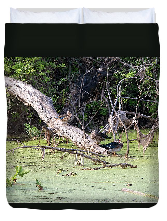 Wood Duck Duvet Cover featuring the photograph Wood Ducks by Linda Kerkau