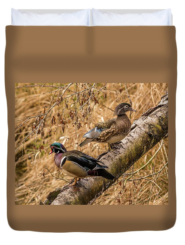 Aix Duvet Cover featuring the photograph Wood Ducks by Marv Vandehey