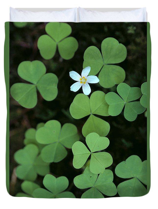 Bloom Duvet Cover featuring the photograph Wood Sorrel Flower by Greg Vaughn - Printscapes