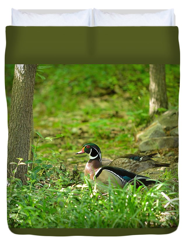 Wood Duck Duvet Cover featuring the photograph Woodies Feeding by Kevin Pugh