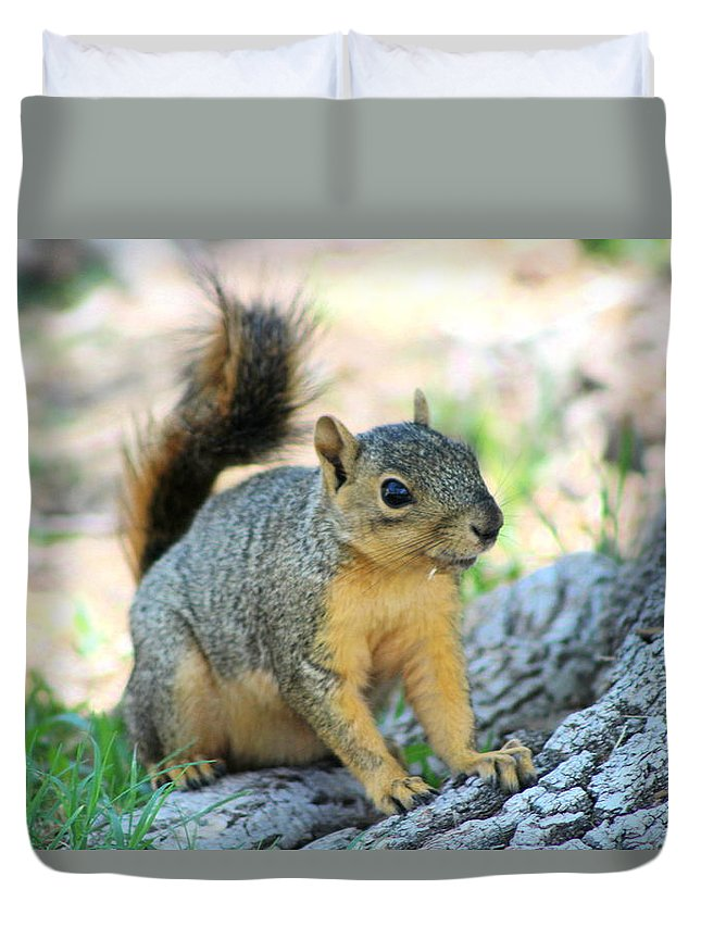 Squirrel Duvet Cover featuring the photograph Work It by Colleen Cornelius