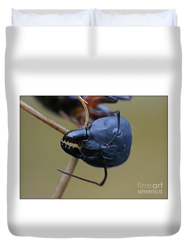 Macro Duvet Cover featuring the photograph Working Hard by Lucky Jaiswal