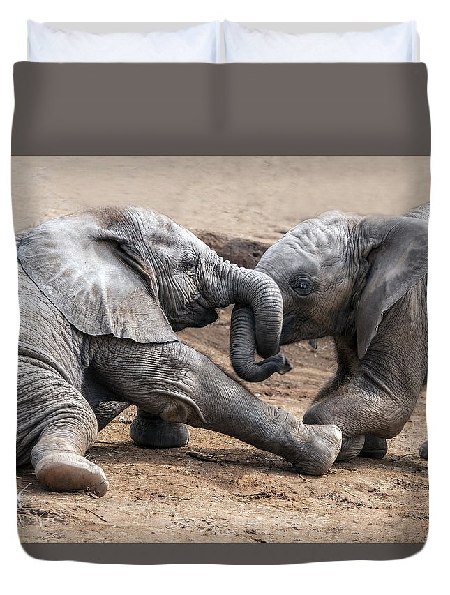 Elephant Calves Duvet Cover featuring the photograph Wrestle-mania by William Bitman