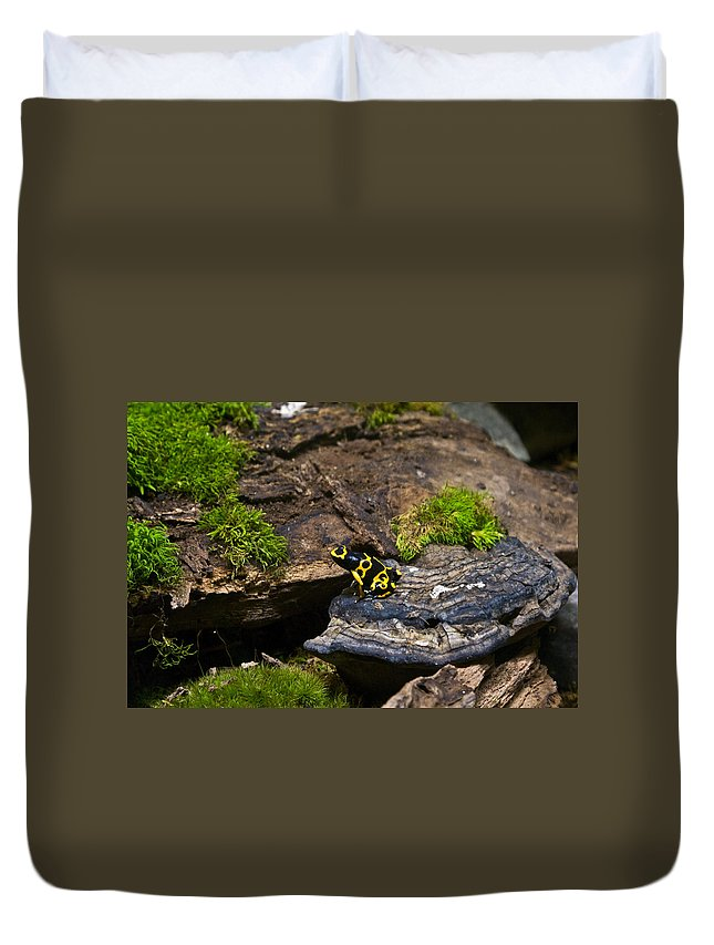 Black Duvet Cover featuring the photograph Yellow And Black Dart Frog by Douglas Barnett