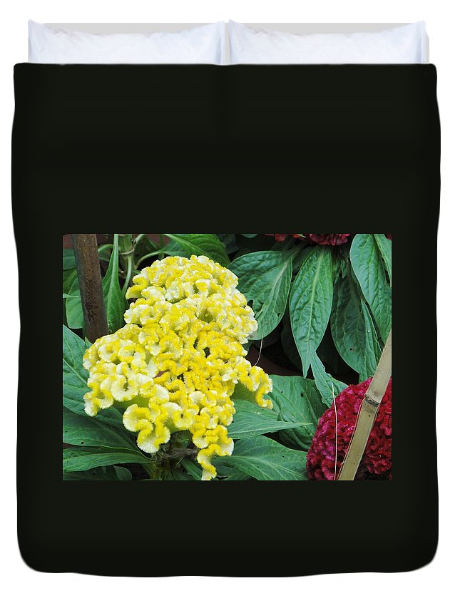 Duvet Cover featuring the photograph Yellow Cockscomb by Usha Shantharam