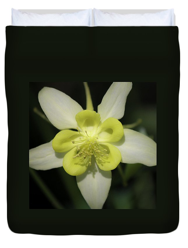 Columbine Duvet Cover featuring the photograph Yellow Columbine Squared 2 by Teresa Mucha