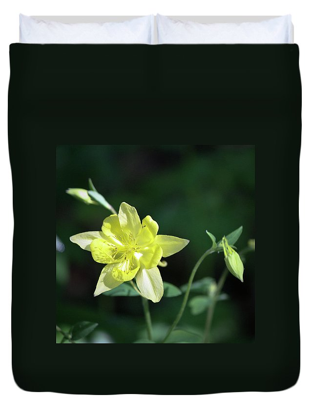 Columbine Duvet Cover featuring the photograph Yellow Columbine Squared by Teresa Mucha