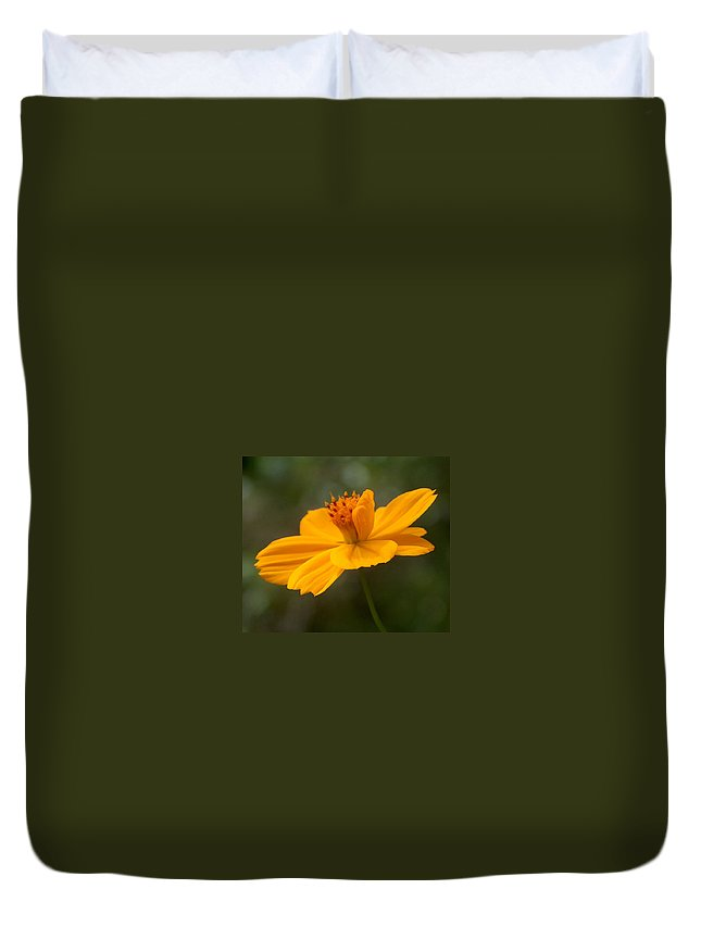 Cosmos Duvet Cover featuring the photograph Yellow Cosmos by Racquel Morgan