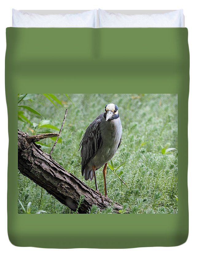 Heron Duvet Cover featuring the photograph Yellow-crowned Night Heron 2 by Paula Ponath
