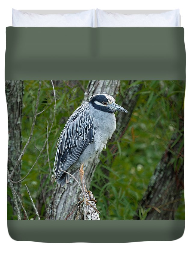 Heron Duvet Cover featuring the photograph Yellow-crowned Night Heron 4 by Paula Ponath