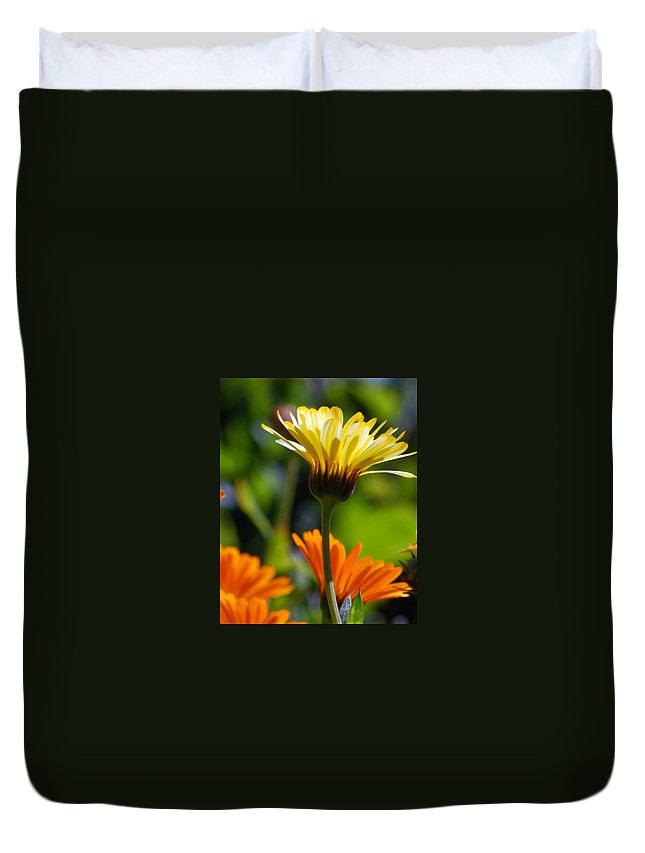 Daisy Duvet Cover featuring the photograph Yellow Daisy by Amy Fose