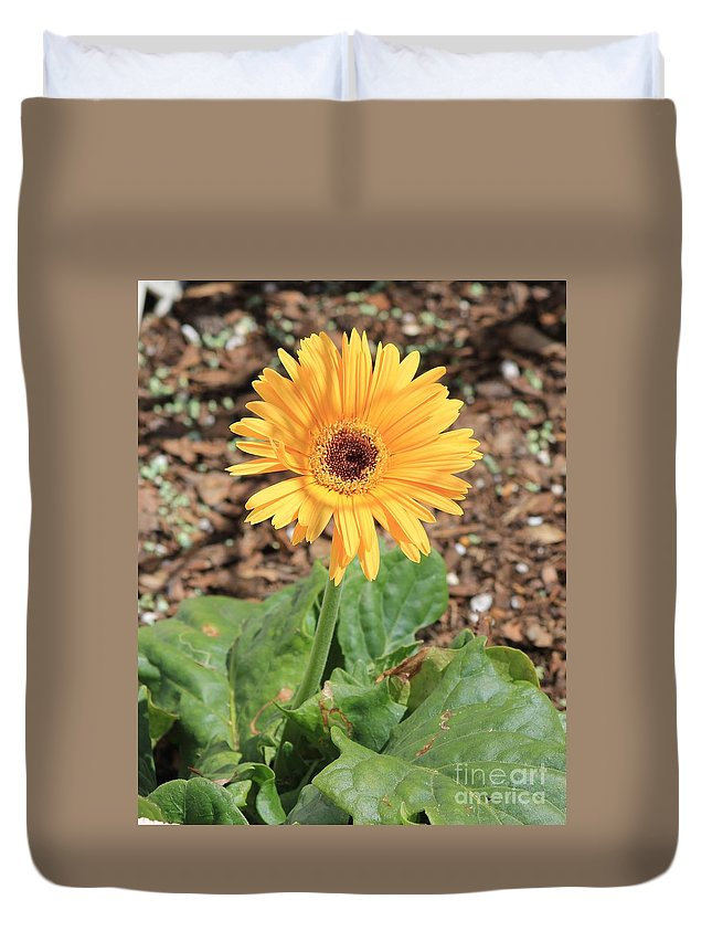 Daisy Duvet Cover featuring the photograph Yellow Daisy by Michelle Powell