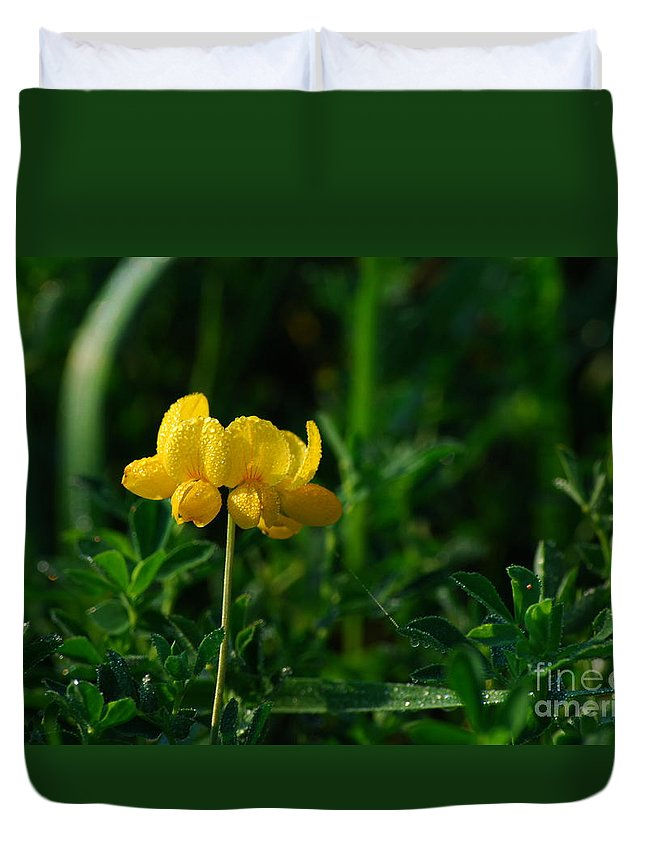 Birds Foot Trefoil Duvet Cover featuring the photograph Yellow Dew Drops by Michelle Hastings
