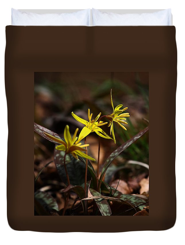 Yellow Dogtooth Violets Duvet Cover featuring the photograph Yellow Dogtooth Violets by Michael Dougherty