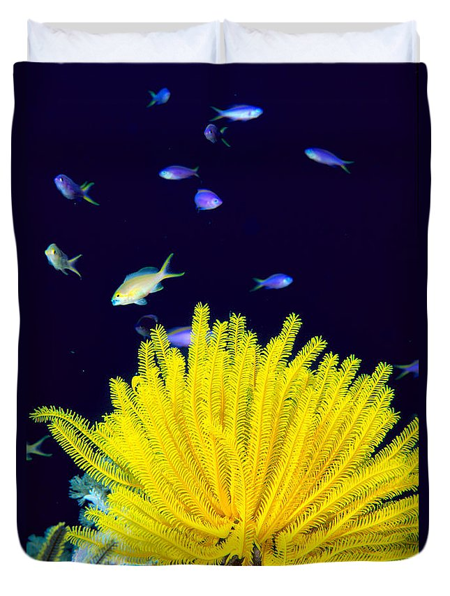 C1943 Duvet Cover featuring the photograph Yellow Feather Star by Ed Robinson - Printscapes