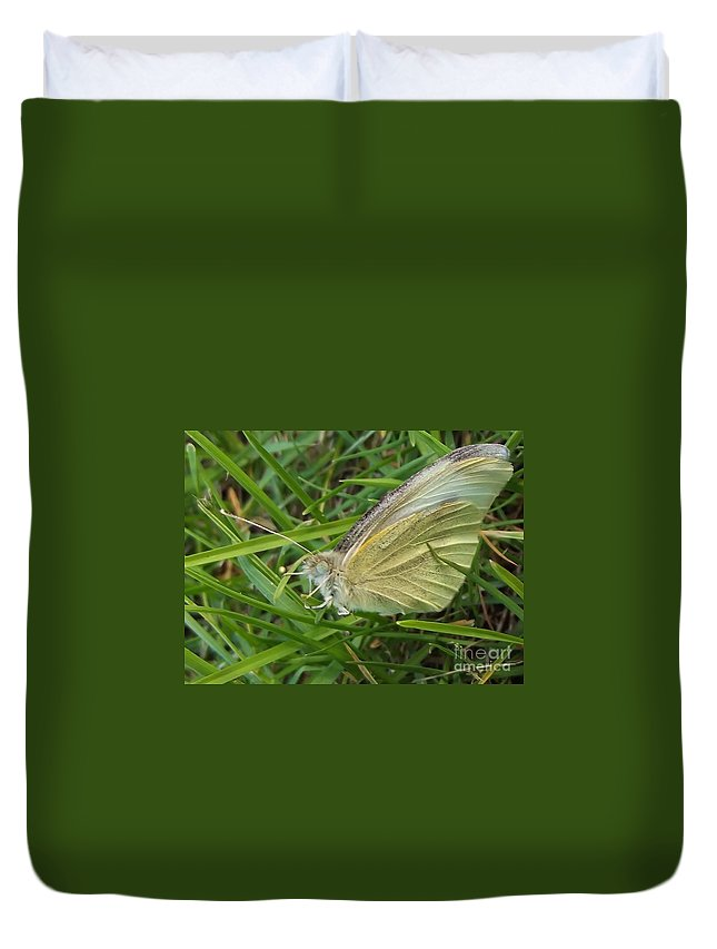 Butterfly Duvet Cover featuring the photograph Yellow Fringed Sulphur Butterfly In Grass Blades Image No 1 Indiana by Rory Cubel