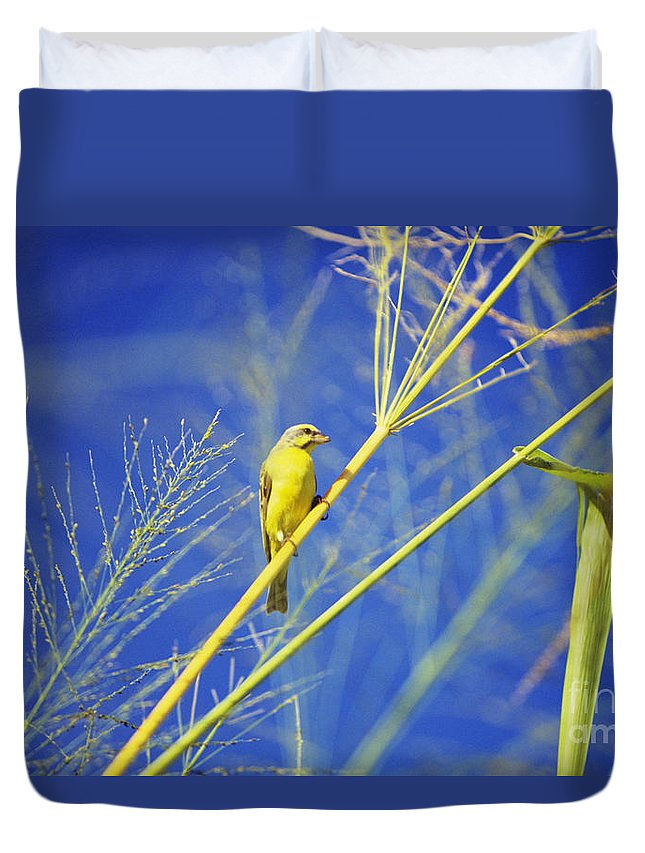 Animal Art Duvet Cover featuring the photograph Yellow Fronted Canary by Bob Abraham - Printscapes