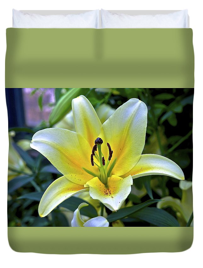Yellow Lily Duvet Cover featuring the photograph Yellow Lily Longwood Gardens by Mark Holden
